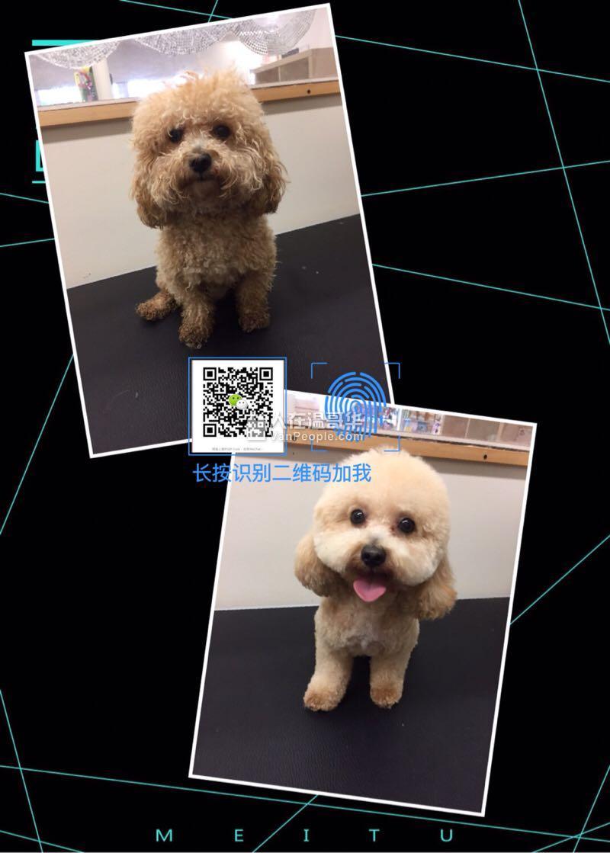 Jerry 犬工房 日式寵物美容服務中心