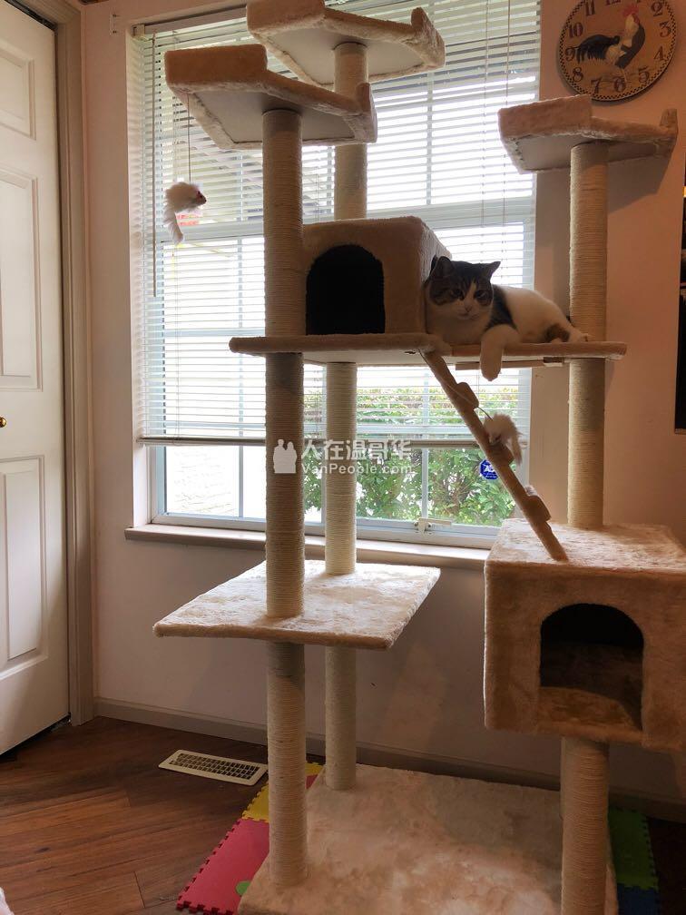 宠乐汇宠物寄养——家庭式寄养,我们可以给宠物们提供干净舒适的生活环境