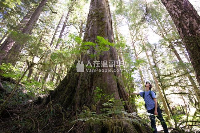 溫哥華市斯坦利公園原始森林生態遊覽