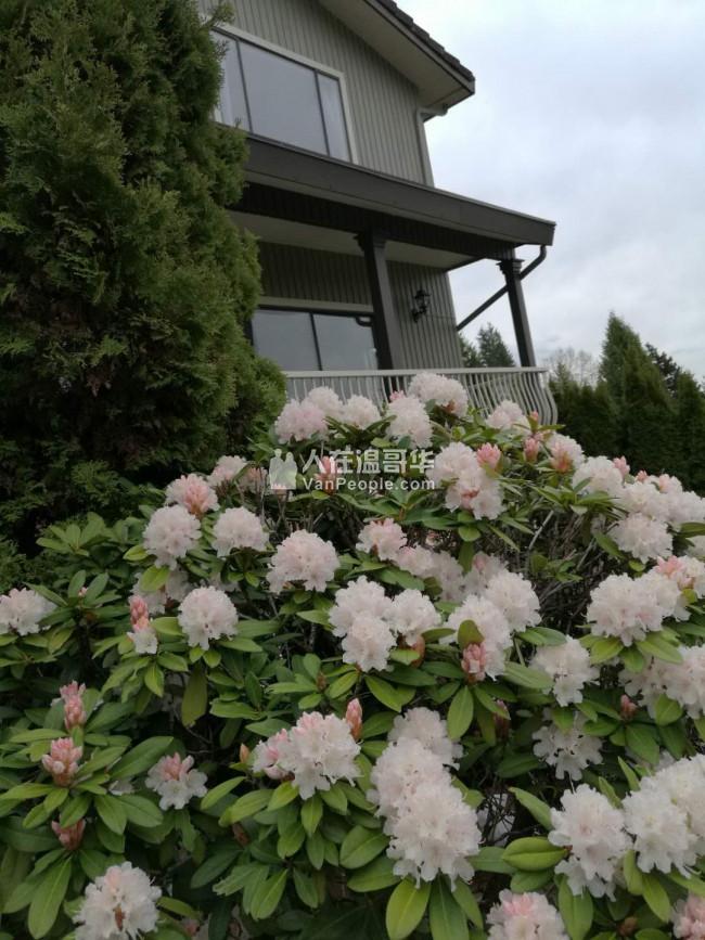 高贵林中心豪华三层精装独立屋,新家具齐全,拎包入住。