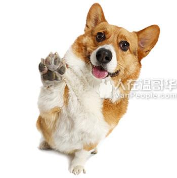 宠物饲养意愿及方式调查——课业项目调查问卷