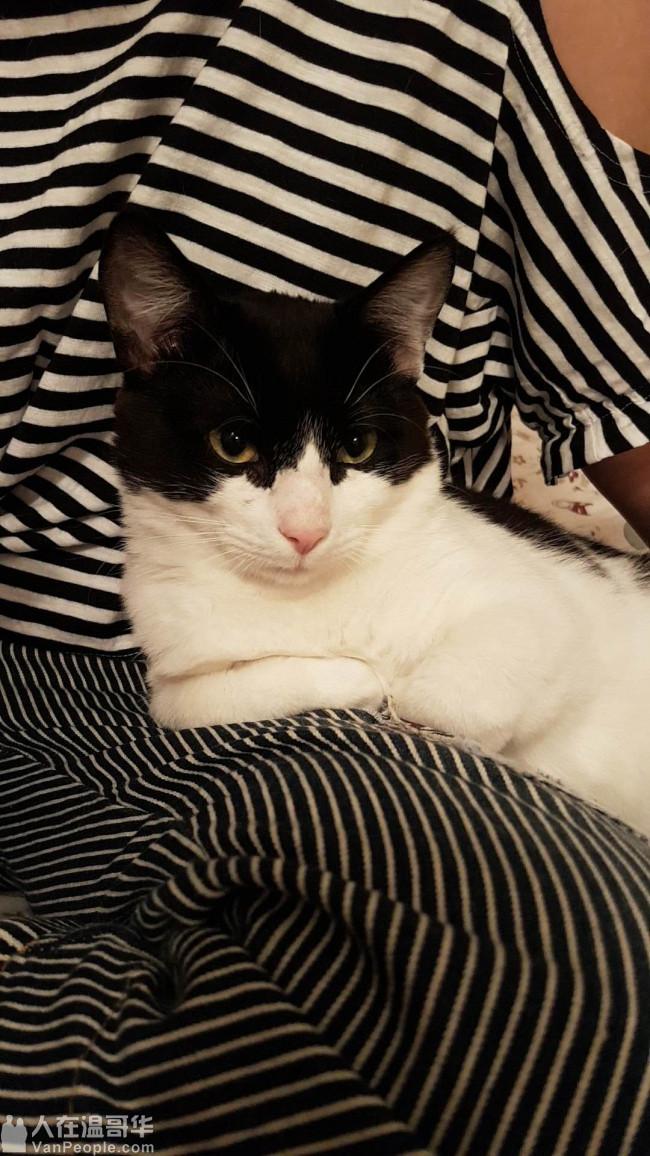 性格很好的猫咪求一个好心人可以领养