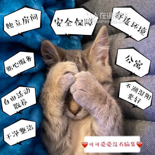 温哥华KK猫咪寄养(美容美发)