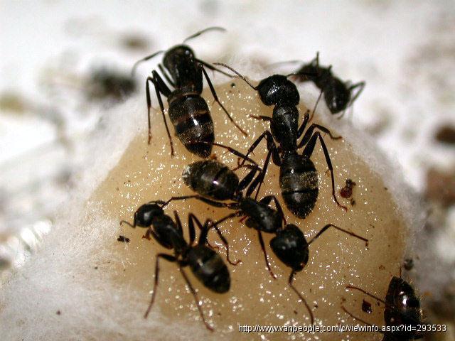 温哥华都市杀虫灭鼠公司,为您解决老鼠,蟑螂,臭虫,蚂蚁,黄蜂等害虫之忧