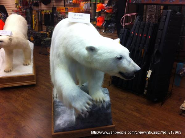 北极熊标本!代办进出口批文,将标本合法带回中国