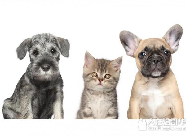 花园城市宠物医院 列治文唯一 提供普通话医疗服务的女兽医 + 宠物皮肤专科医生