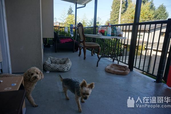 妈咪宠物寄养,20年经验,狗/猫分开住,不同的House,狗15元/日,猫8元/日。可接送