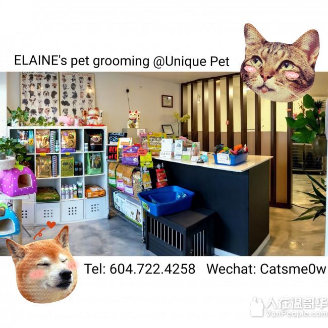 ELAINE\'s pet grooming~寵物美容  針對狗,貓,兔子,小動物 給予最專業的諮詢