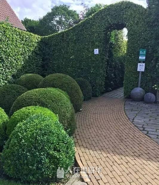 华翰园艺 花园整理、清理杂草、修剪花树、定期剪草、铺草皮、精打草根等各项园艺服务