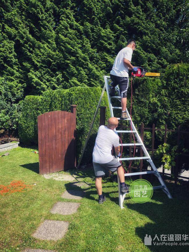 《四季青园艺》大温地区专业草坪维护 花园维护 围栏Deck制作  各类铺砖和挡土墙