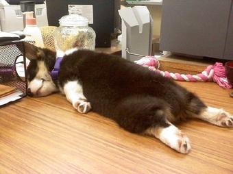 快来看萌宠们!今天是【带狗狗上班日】简直没法安心工作啊~