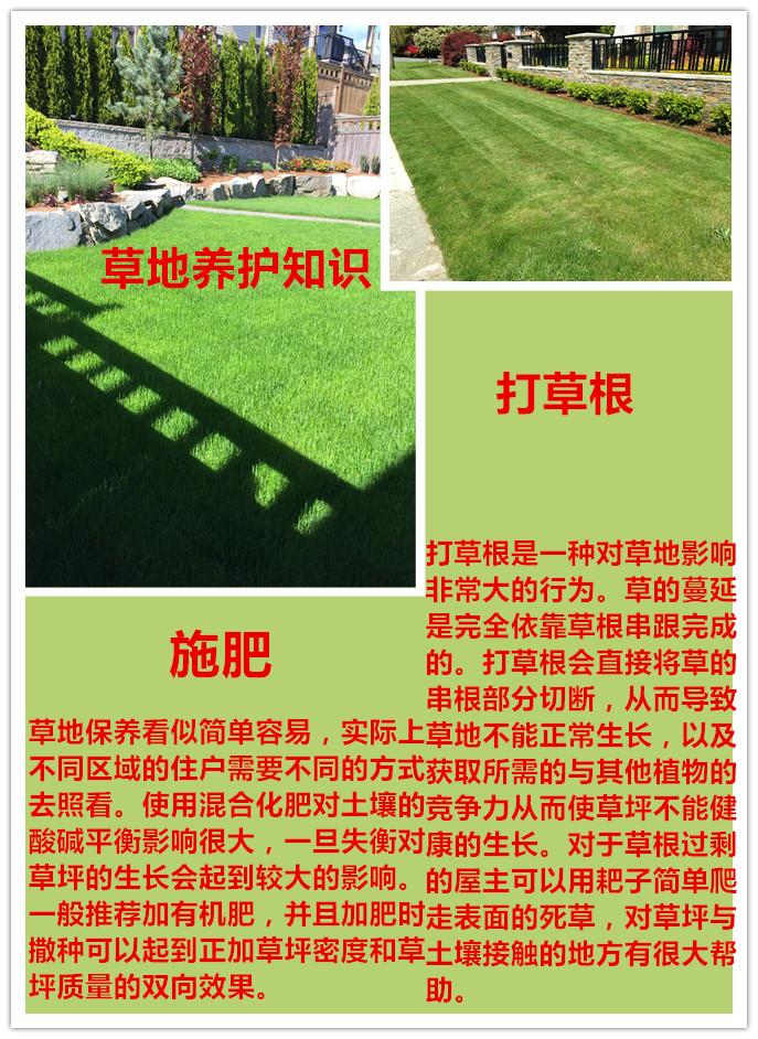 【金铲子园艺 Ltd. 】免费评估,专业快速,售后服务完善,BCLNA(BC园艺协会)专业认证