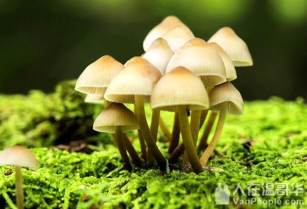 10月28日 揭开蘑菇的神秘面纱Demystifying Mushrooms