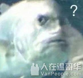 多图|人群中冲出一个裸男,二话不说跳进鲨鱼池,鲨鱼都惊了…