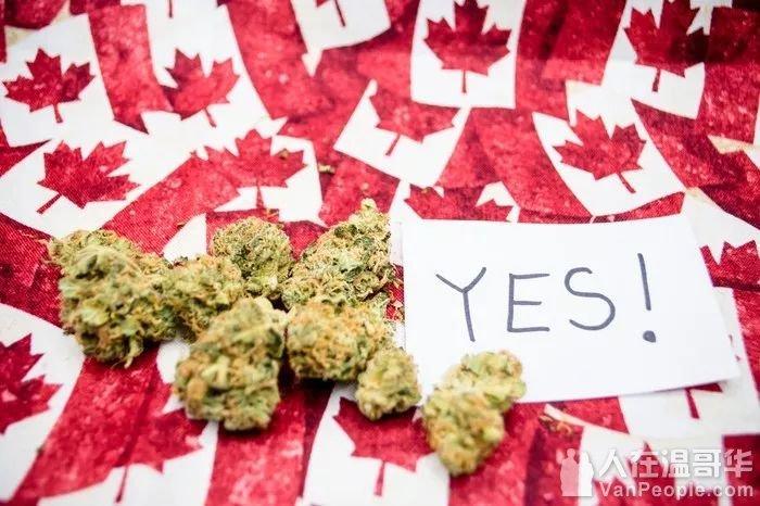 官宣!大麻合法化会给华人带来什么?华人关心的房市又将因大麻受何影响?