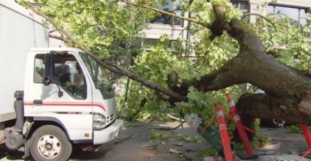 大风警告发出 电线坠落 千户停电!