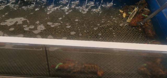 人宅温哥华抗疫行动:大统华的特价龙虾